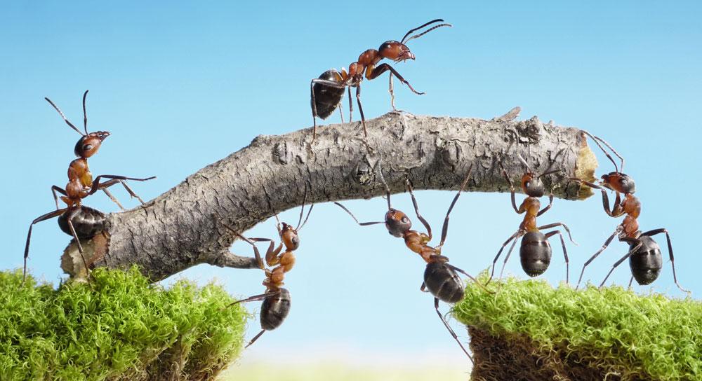 Teamwork jobsøgning